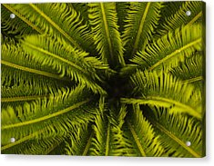 Acrylic Print featuring the photograph Palm Fronds by Amber Kresge