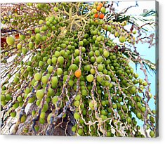 Palm Grapes Acrylic Print