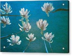 Palm Grove Acrylic Print