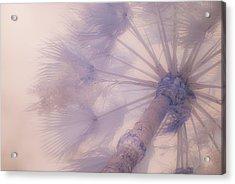 Palm Haze Acrylic Print