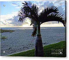 Palm In The Morning Acrylic Print