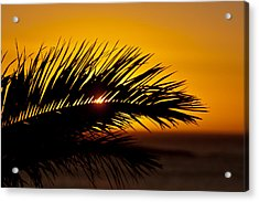 Palm Leaf In Sunset Acrylic Print