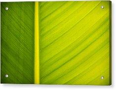 Palm Leaf Macro Abstract Acrylic Print by Adam Romanowicz