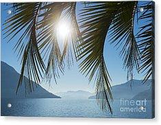 Palm Leaf Acrylic Print by Mats Silvan