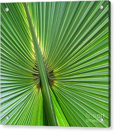 Acrylic Print featuring the photograph Palm Love by Roselynne Broussard