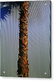 Palm On Sheet Metal Acrylic Print by Randall Weidner