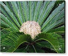 Palm Plant Acrylic Print