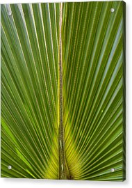 Palm Reader Acrylic Print