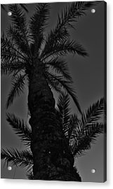Palm Reader Acrylic Print by Tara Miller