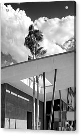 Palm Springs Animal Shelter Palms Bw Palm Springs Acrylic Print by William Dey