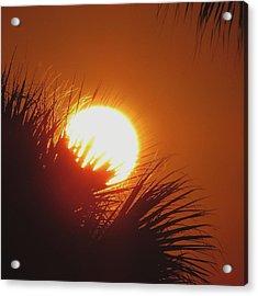 Acrylic Print featuring the photograph Palm Sunday by Nikki McInnes