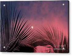 Palm Sunset Acrylic Print