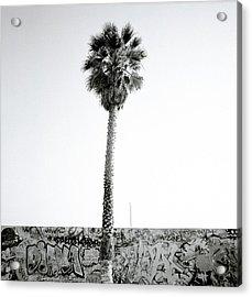 Palm Tree And Graffiti Acrylic Print