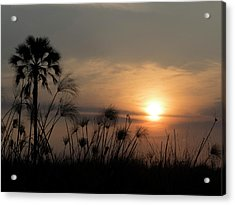 Palm Tree And Papyrus Plants At Dusk Acrylic Print
