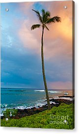 Palm Tree At Sunset. Acrylic Print