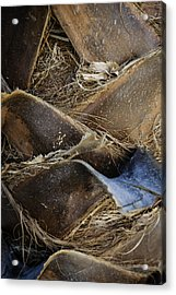 Palm Tree Bark Acrylic Print by Sebastian Musial