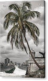 Palm Tree In Havana Bay Acrylic Print