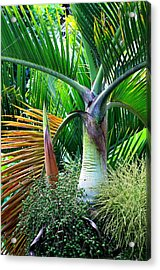Palm Tree Inflorescence In The Rainforest  Acrylic Print by Karon Melillo DeVega