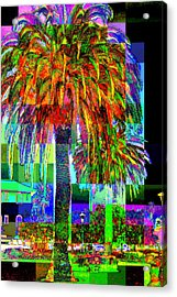 Acrylic Print featuring the photograph Palm Tree by Jodie Marie Anne Richardson Traugott          aka jm-ART