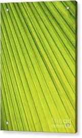Palm Tree Leaf Abstract Acrylic Print by Elena Elisseeva