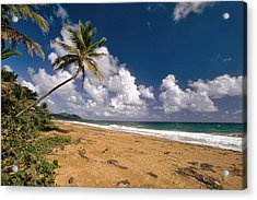 Palm Tree On Maunabo Beach Puerto Rico Acrylic Print by George Oze