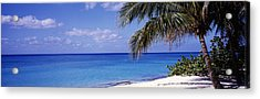 Palm Tree On The Beach, Seven Mile Acrylic Print