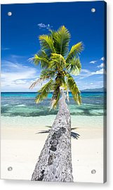 Palm Tree Over Water Acrylic Print by Joe Belanger
