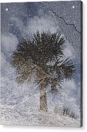 Palm Tree Reflection Acrylic Print by Michel Mata