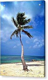Palm Tree Swayed Acrylic Print by Kristina Deane