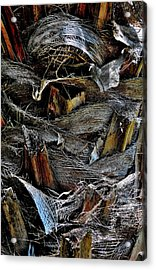 Palm Tree Trunk - Darwin - Australia Acrylic Print