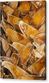 Palm Tree Trunk Detail Acrylic Print by Bob Phillips