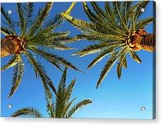 Palm Trees Against A Blue Sky Acrylic Print by Wladimir Bulgar