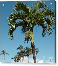 Palm Trees And Blue Sky Acrylic Print by Sharon Mau
