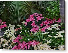 Palm Trees And Flowers Acrylic Print by Kathleen Struckle