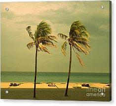 Palm Trees At Hallendale Beach Acrylic Print