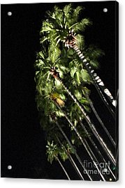 Palm Trees At Night Acrylic Print by Gayle Melges