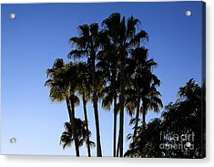 Acrylic Print featuring the photograph Palm Trees by Chris Thomas