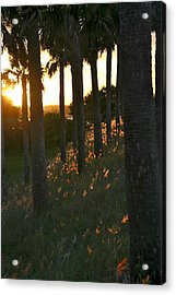 Palm Trees In Silhouette Acrylic Print