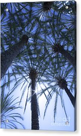 Acrylic Print featuring the photograph Palm Trees In The Sun by Jerry Cowart