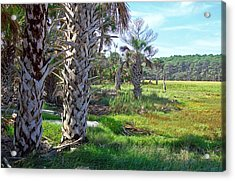 Acrylic Print featuring the photograph Palm Trees On Hunting Island by Ellen Tully