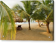 Palm Trees On Sandy Beach, Placencia Acrylic Print by William Sutton