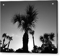 Palm Trees Reach For The Sky Acrylic Print