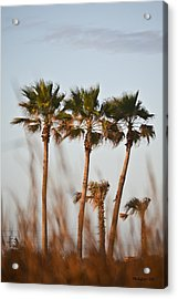 Palm Trees Through Tall Grass Acrylic Print