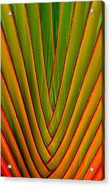 Palm Weave Fine Acrylic Print