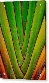 Palm Weave Grande Acrylic Print