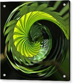 Palmetto Nautilus Acrylic Print by Gary Holmes