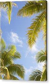 Palms And Sky Acrylic Print by Brandon Tabiolo