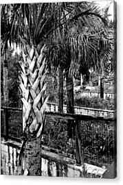 Palms And Walls In Black And White Acrylic Print by K Simmons Luna