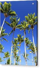 Palms On Blue Sky Acrylic Print