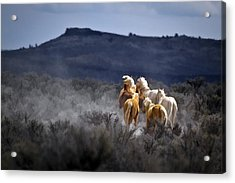 Palomino Buttes Band D1482 Acrylic Print by Wes and Dotty Weber